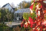 Canadese Eik in herfstkleuren