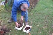 De dahlia's worden bewaard in kistjes met een krant