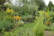 De Rudbeckia geeft mooie gele accenten in de tuin