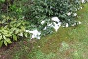 Nog een restje sneeuw