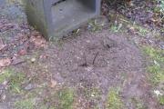 Duinroos uit het plantsoen in de Collegiantenstraat op de plaats van de gestorven Brem