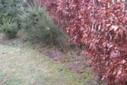 Berk uit het Sedum/Viburnum veld naar een eigen plek