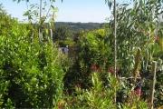 Blik op het zuidoosten vanaf het terras. Op de voorgrond Oleander.