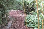bamboe1