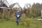 Platanus Hispanica op weg naar z'n plaats in de tuin