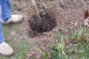 Mengen met compost voor een mooi resultaat