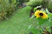 Zonnebloem en herfstaster