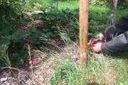 Heerlijke aardbeien in de fruitborder