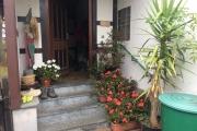 Eind oktober pelargonium en fuchsia beschut tegen de vorst