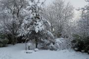 Sneeuw in januari