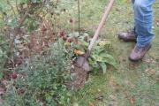 Voorzichtig de schep de grond in