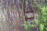 Salix op stam was na de sneeuw en storm ook scheef gezakt