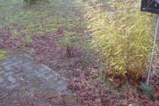Duinroos uit het plantsoen in de Collegiantenstraat